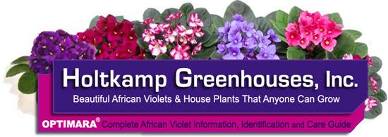 Optimara How To Identify African Violet Varieties