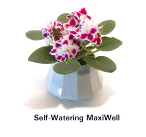Optimara Self-Watering Pot