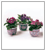 Optimara Self Watering Ceramic Pots